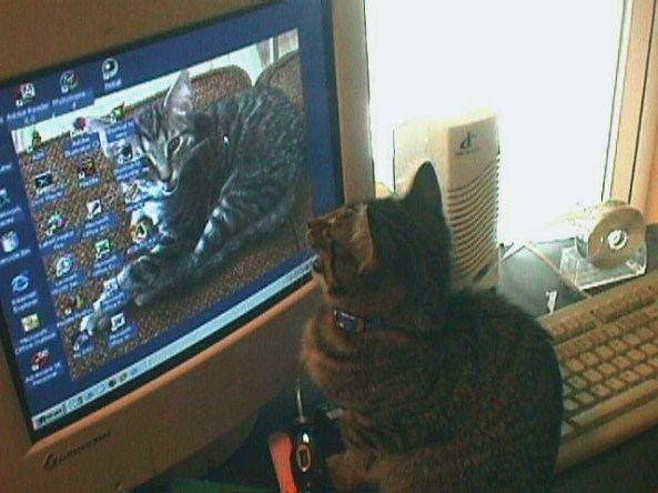 Funny Cat Pictures: Cinco Yelling at Computer