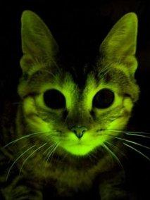Glowing Cat  BBC