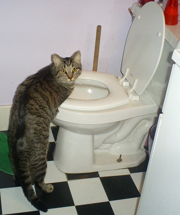 """""""I wasn't gonna drink the toilet water Mamma!"""""""