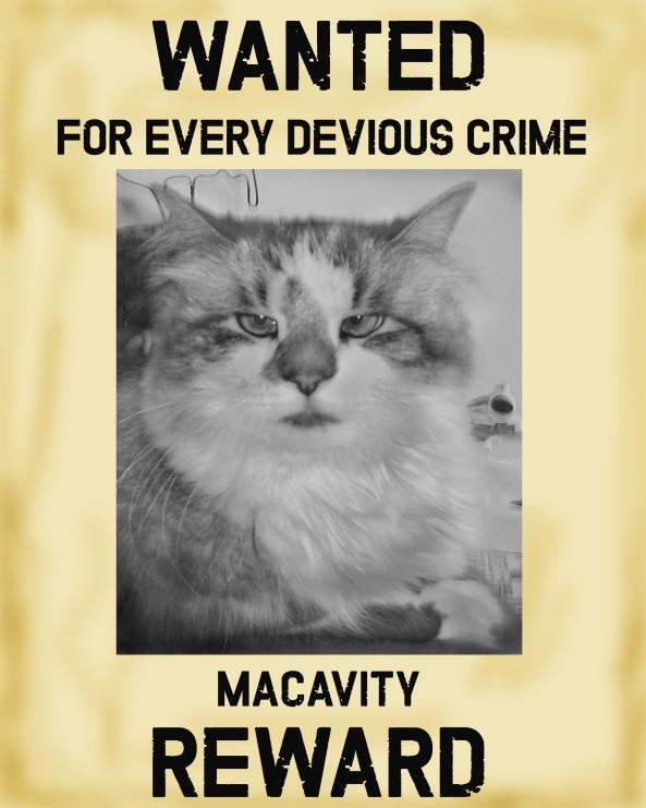 Macavity Reward Poster