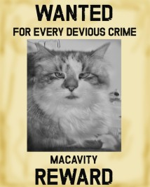 Macavity Reward Poster
