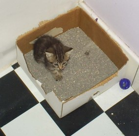 Cat Litter: Manna 3 weeks of age