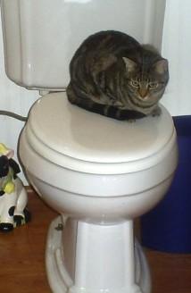 Cat Litter: Manna on the Toilet