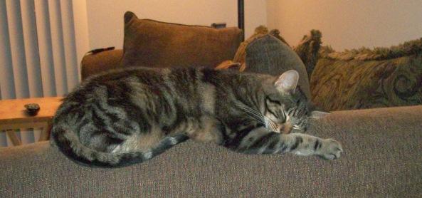Manna Sleeping on Couch Arm