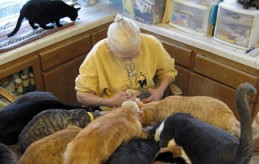 Helping Cats and Dogs Animal Hoarder