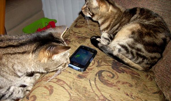 Cat Games 14