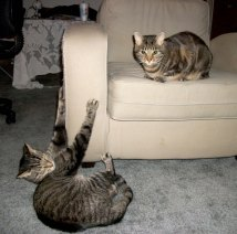 LIfe Lessons from Cats Cinco and Manna's Chair