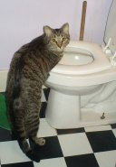 LIfe Lessons from Cats Cinco and the Toilet