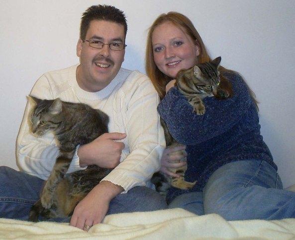 Christmas Cats Playful Kitty Family