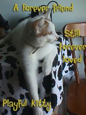 Hemingway 6 word story Forever Friend