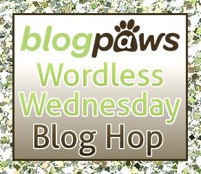 Wordless Wednesday Blog Hop BlogPaws