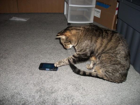 Cat Games 4