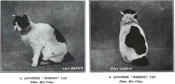 Chinese history Japanese Kimono Cat