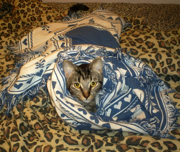 Cold Weather Cat Tips Cinco