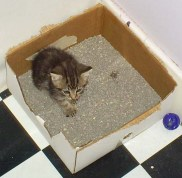10 Reasons Your Cat Won't Use the Litter Box baby Manna