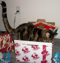 Cat Toy - Boxes