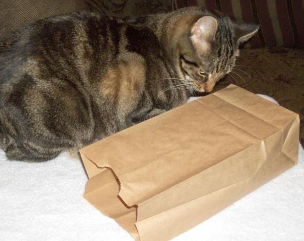 Cat Toy - Paper Bag