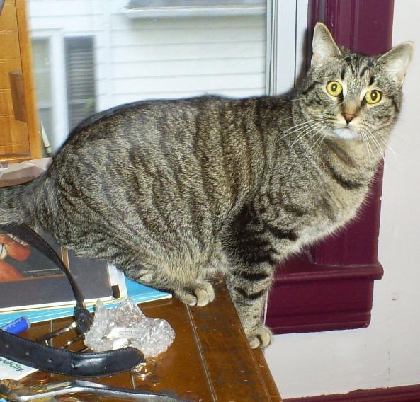 Kitty Cat Limericks Cinco on a shelf