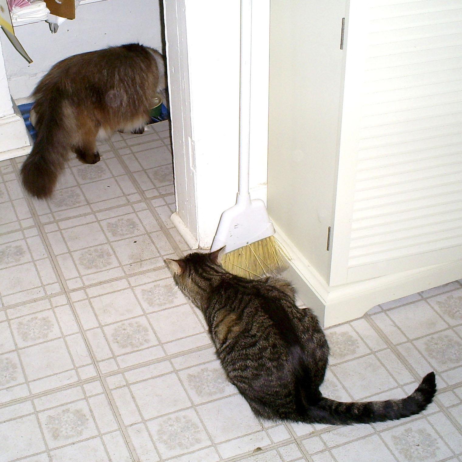 cat gas remedy
