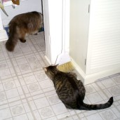 10 Reasons Your Cat Won't Use the Litter Box Cinco and Cuddles