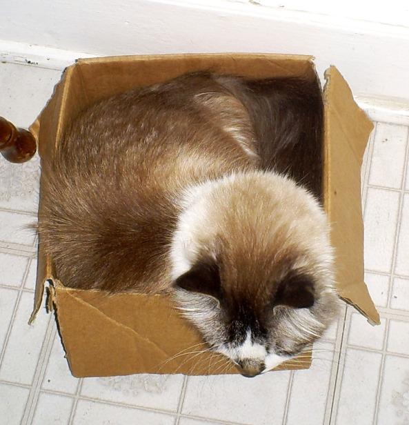 Kitty Cat Limericks Cuddles in a Box