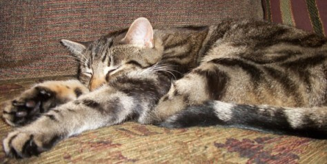Facts about Purring Manna