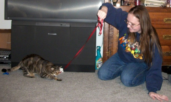 #recipieformoments Blog Paws Manna Robin and a Ribbon