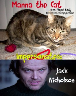 Cat Photography Manna Vs Jack Nicholson