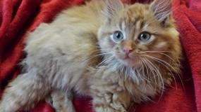 Cats That Are Beating the Odds Noel