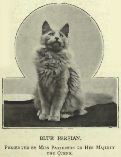 Victorian era cats - Queen Victoria's Cat